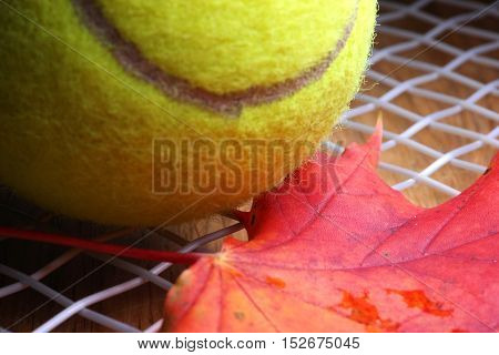 An autumn maple leaf and a tennis ball on the stringbed of a tennis racket.