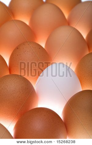 White Egg Between Brown Ones