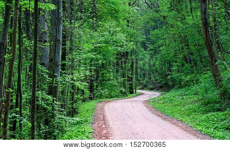 Winding road through a dark green forest at day time