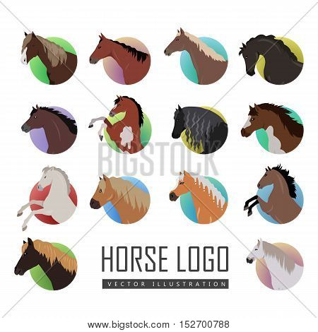 Set of horse logo. Vector in flat style. Variety horse heads in colored circles. Collection of horse icons for equestrian club, horse riding courses, web page design. Isolated on white background