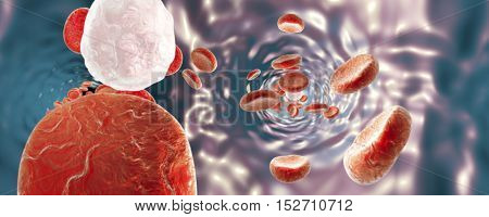 Blood vessel with red blood cells and white blood cells, spherical 360n degree panorama. 3D illustration