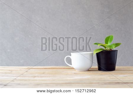 still life natural pothos (Epipremnum aureum) on wooden table