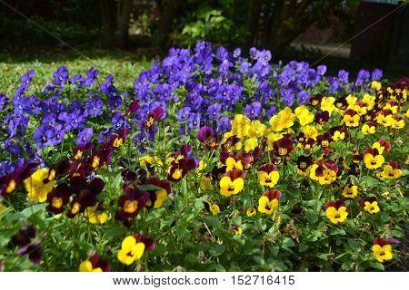 Los colores de la primavera y sus matices.