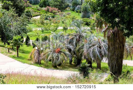Top view of a part of the arboretum with a variety of beautiful tropical plants along the tracks.