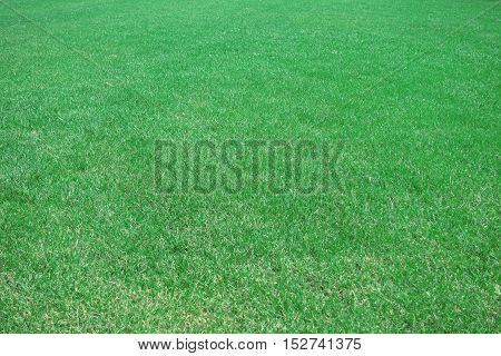 Beautiful green grass. Outdoors, pasture, pattern, plant.