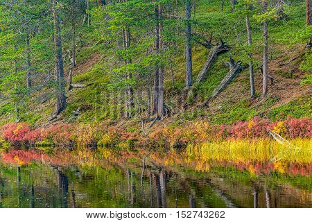Autumn colored plants near water in forest landscape