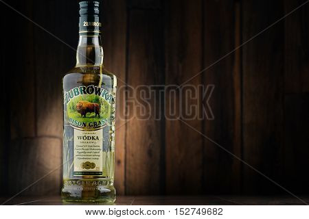 POZNAN POLAND - JULY 15 2016: Zubrowka also known in English as Bison Grass Vodka is a dry herb-flavoured vodka distilled from rye and manufactured by Polmos Bialystok Poland