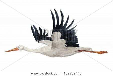 Watercolor flying white stork. Hand painted ciconia bird illustration isolated on white background. For design, prints or background.