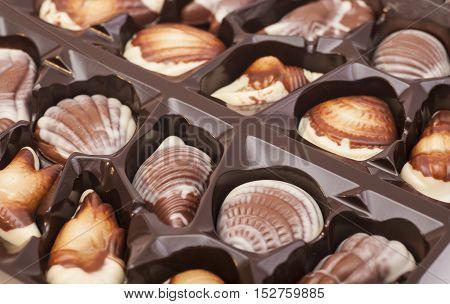 Gourmet chocolate as shell sweet praline bonbons background