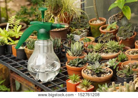 Water spaying bottle and cactus / cactus farming