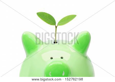 A green piggy bank with a green tree / Green saving concept / Economic growth with environmental concern