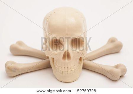 human skull skeleton with crossed bones on white