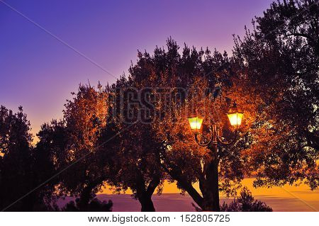 streetlight with tree silhouette at violet sunset