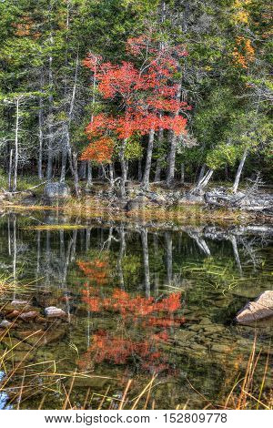 Beautiful Lake in Acadia National Park on a Clear Autumn Day perfectly reflecting a tree