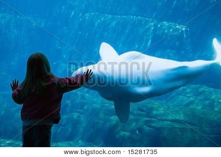Girl admires beluga whale at the Vancouver Aquarium.