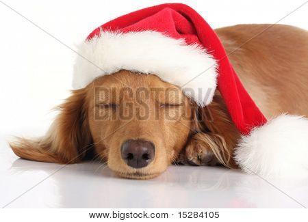 Dachshund dog sleeping with Santa hat.