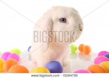 Easter bunny rabbit surrounded by Easter eggs.