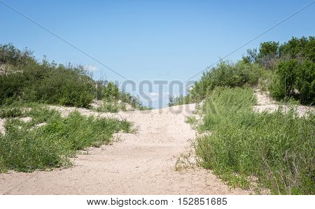 horizontal image of a scene of a white sandy path on a slight incline on the beach with a lot of beautiful free foliage growing on with side with a bright blue sky on a hot summer day.