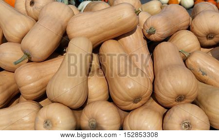 Squashs In A Market, Montreal, Quebec, Canada