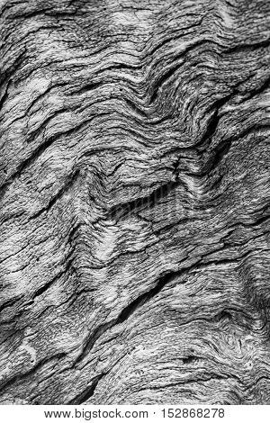 Black and white wood texture - abstract nature background