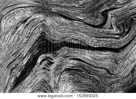 Black and white wood texture - abstract nature background.