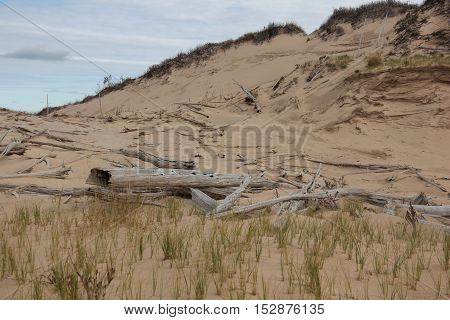 Ghost forest on the sleeping Bear of Sleeping Bear Dunes National Lakeshore, Michigan
