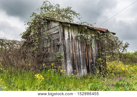Shed overgrown with vegetation in field of wildflowers. Capture on rainy cloudy day.