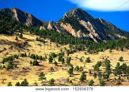 Alpine Pine Trees on a Sunny Day with Jagged Mountains in the Background and a Yellow Grass Field