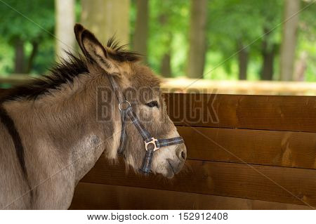 Cloe up of a Donkey in a stable