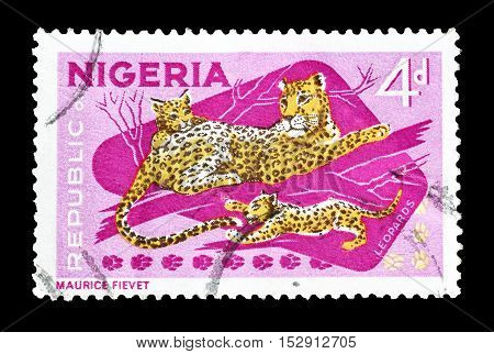 NIGERIA - CIRCA 1965 : Cancelled postage stamp printed by Nigeria, that shows Leopard and cubs.