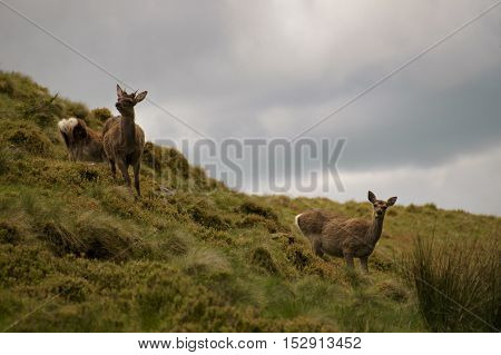 Male and female deer are wary in the field
