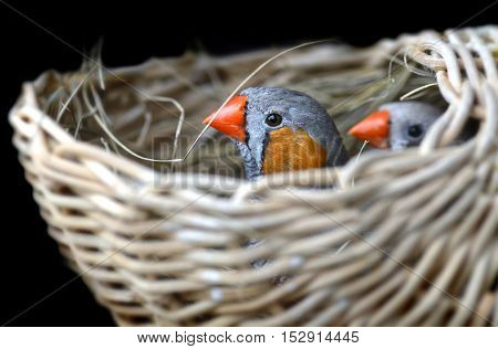 Couple Of Zebra-finch Bird
