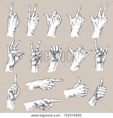 Sketch of hand gestures. Monochrome set of the different positions of the hands: count gesture victory sign Shaka okay pointing thumbs up closed fist.