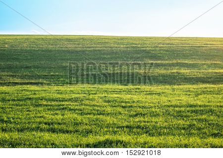 Background photography of bright lush grass field under blue sunny sky. Outdoor countryside meadow nature. Rural landscape.