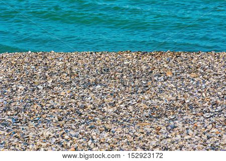 Black Sea Shore Covered with Shells of Mussels