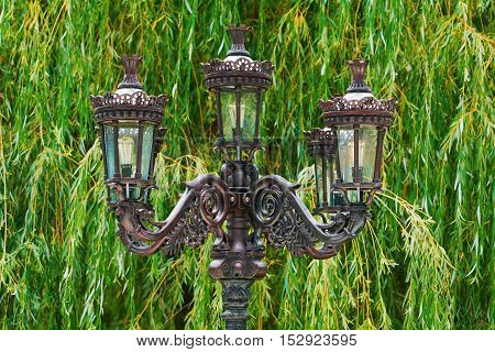 Old Street Lamp on the Background of Willow