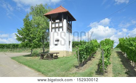 Watchtower and Picnic Area in Vineyard Landscape in Rhinehessen,Rhineland-Palatinate,Germany