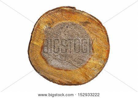 Cut transverse tree alder on white background