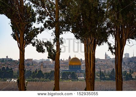 View of Jerusalem with Al-Aqsa Mosque through the trees...
