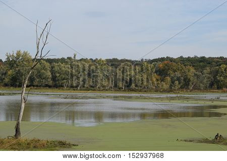 calm water in a serene swamp land