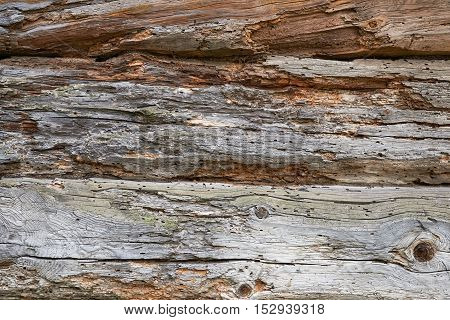 A fragment of a wall made of wooden logs. Logs amazed borers. Texture background