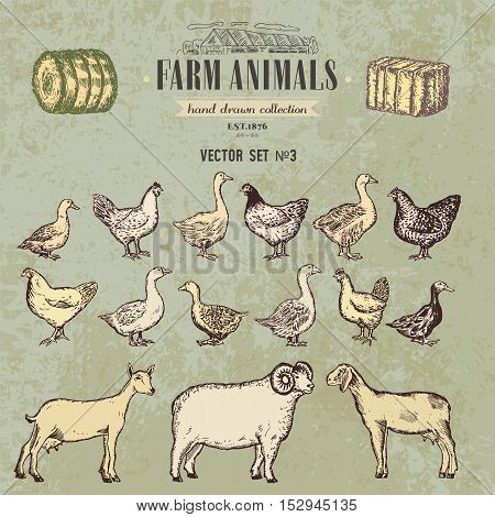 Farm animals vintage hand drawn collection chicken geese sheep goats vector