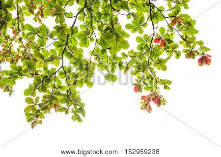 Green leaves isolted on a white background