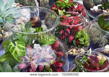 Decorative glass vases with succulent and cactus plants. Glass interior terrarium with succulents and cactuses.Miniature garden in glass with cactuses and succulents.