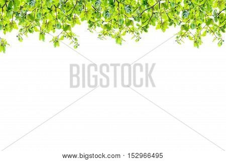 green leaves frame isolated on white abstract nature background for spring summer background and product