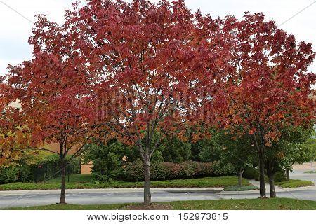 Fall colors as seen in Omaha Nebraska