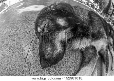 A dog looking in black and white vision, another stray dog laying on the gound, meanwhile the indifference of the people around. Concept of difficult life or dog's life.