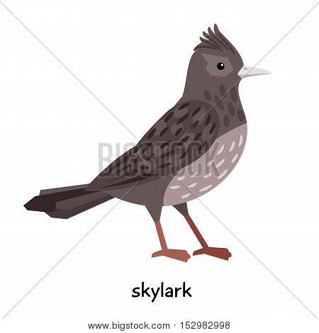 Little Skylark with dark feathers vector illustration