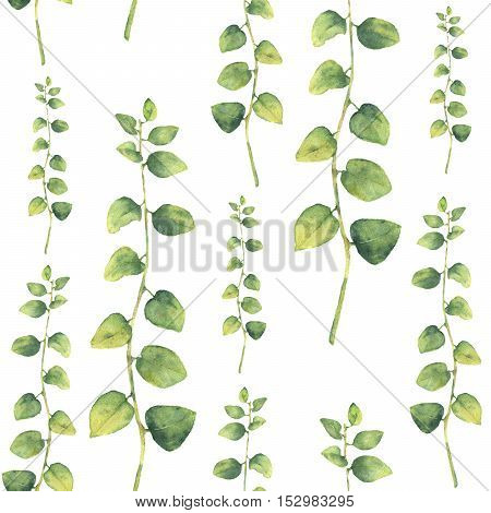 Watercolor green floral seamless pattern with herbs with round leaves. Hand painted pattern with branches and leaves of curly herb isolated on white background. For design or background.