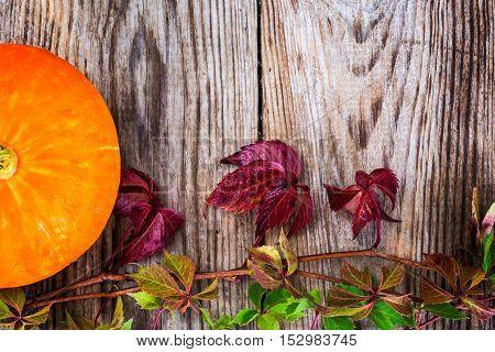 Parthenocissus with Orange Pumpkin on Wooden Rustik Background Natural Photo